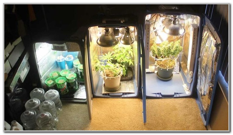 Build Your Own Hydroponic Grow Box
